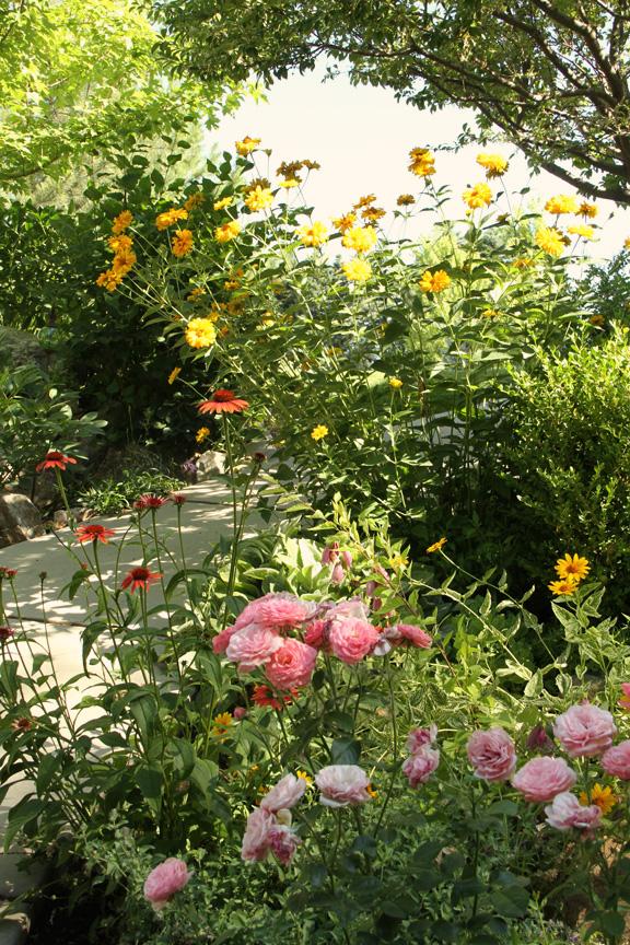 In the garden-1