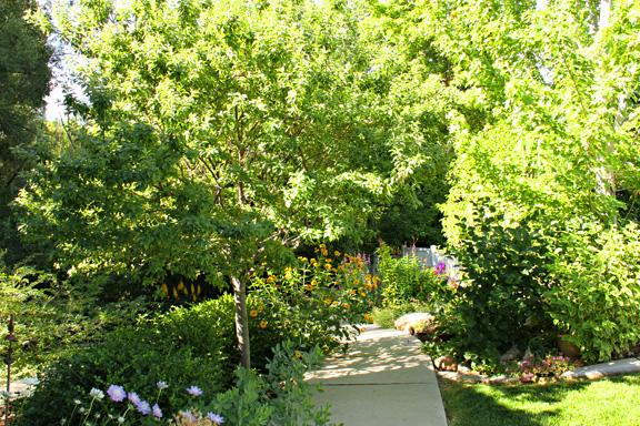 In the garden-2