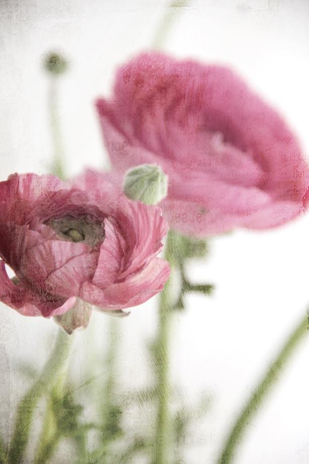 Winter Blooms-2