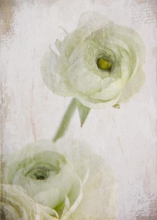 Winter blooms-3