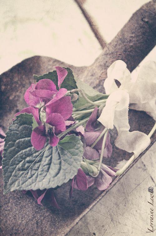 Sweet Violets-7