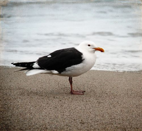Beach Bird copy