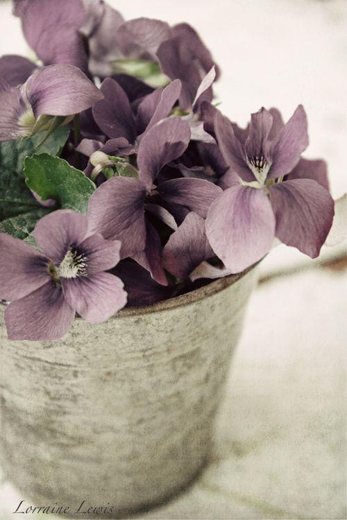 Sweet Violets-3 copy